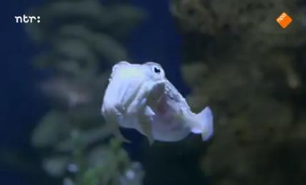 De Kennis van Nu – Leren van de Zeekat