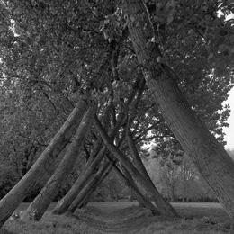 Kromme Bomen